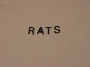 Phobia - Rats