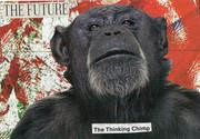 The Thinking Chimp~A