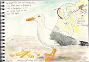 Out: sketchbook, Seagull flies between urbanization and nest