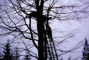 treehouseop