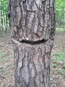Дерево улыбается )
