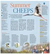 Summer cheeps