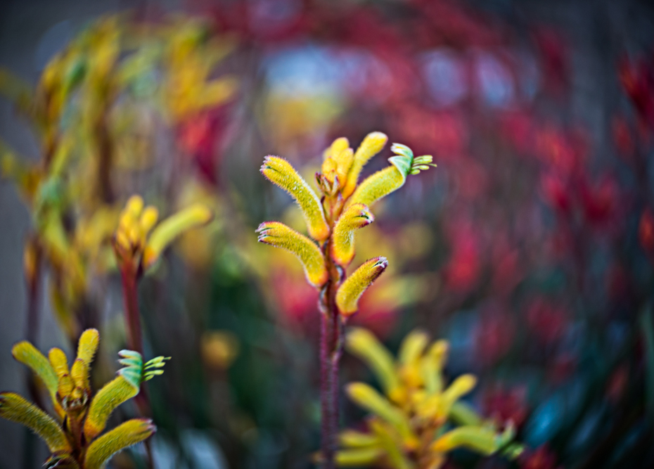 Η γιορτή των λουλουδιών (1) ...