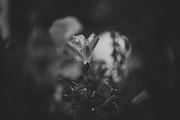 Η γιορτή των λουλουδιών (4) ...