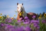 Emilton (horse)