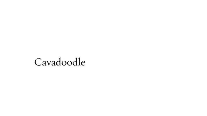 Cavadoodle