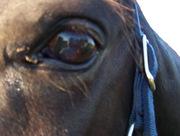 Ace's eye
