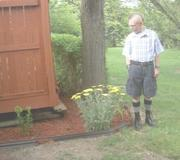 Yarrow, edging, and lots of mulch