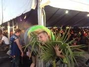 Punk Palm