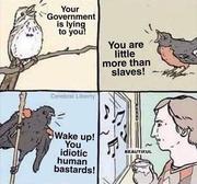 bird-calls-to-the-dumb-goyim-retardslol