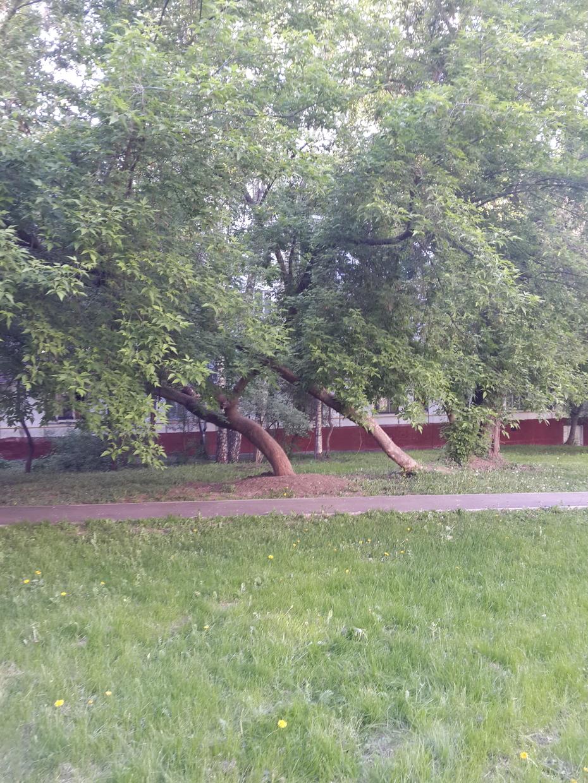 Аномальная зона рядом с домом)