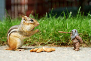 Chipmunk Wars 1