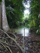 The central catchment area hike - Traversing the jungle from west to east