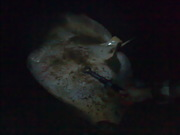 Huge Ray..Upside down..Scarey!!!