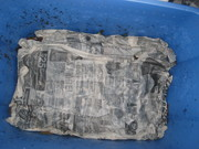 Wet newspaper to keep mosture in and gnats out