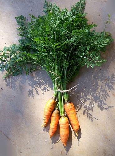 Carrots 2010
