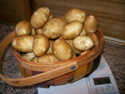 Potatoes From The Garden