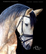 Bayo Horse Painting - glazing six months