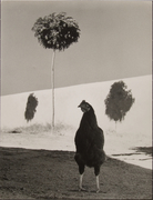 """Creative Photo Group (1961-1969)Exhibition S 1964:""""Michael O'Cleary"""""""
