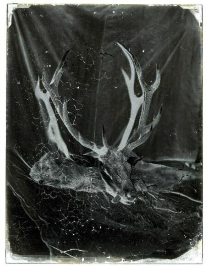 Charles Negre (Circle Of): Remains of a Deer, Cheveuse Valley, Near Paris