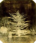 Neville Story-Maskelyne: Fir Tree, England