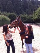 Superación de duelos con caballos