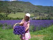 Rosie making the Lavender look good.