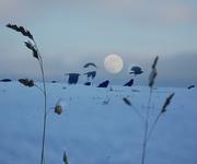 Snowy Full Moon