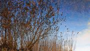l'albero e i canneti