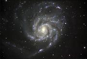 oneill M101