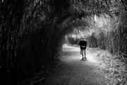 in cammino verso l'oblio
