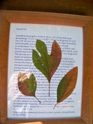 Sassafras Leaves ByLightOfMoon  etsy nature tree