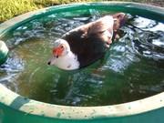 Douglas in his pool