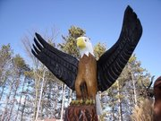Expanded Wings Eagle
