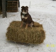 Going for a hay sleigh ride
