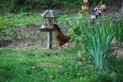 Opportunistic feeder