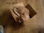 Dec. 30th Kitten in a box