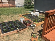 First Raised Bed Square Foot Style Garden