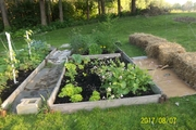 Raised beds and straw bale growing