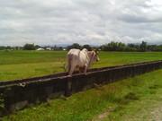 cagayan valley (26)