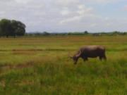 cagayan valley (32)