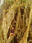 Century Old Tree