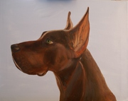 Brown Great Dane wip 072014