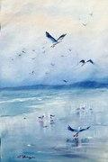 Seagulls galore