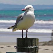 resource_seagull9