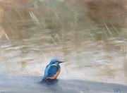 Kingfisher Winter Blues