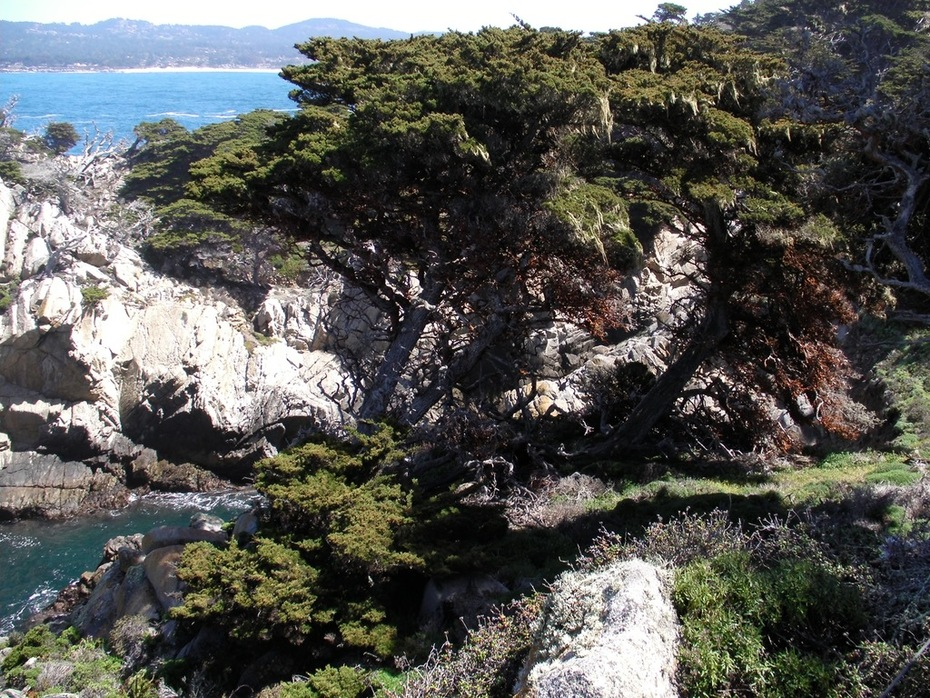 point-lobos-resource-2