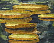 Mayeur Reachel, Your Pad Or Mine, 20 x 16