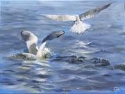 Seagull relay race