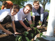 Solar Youth Stewards planting flowers